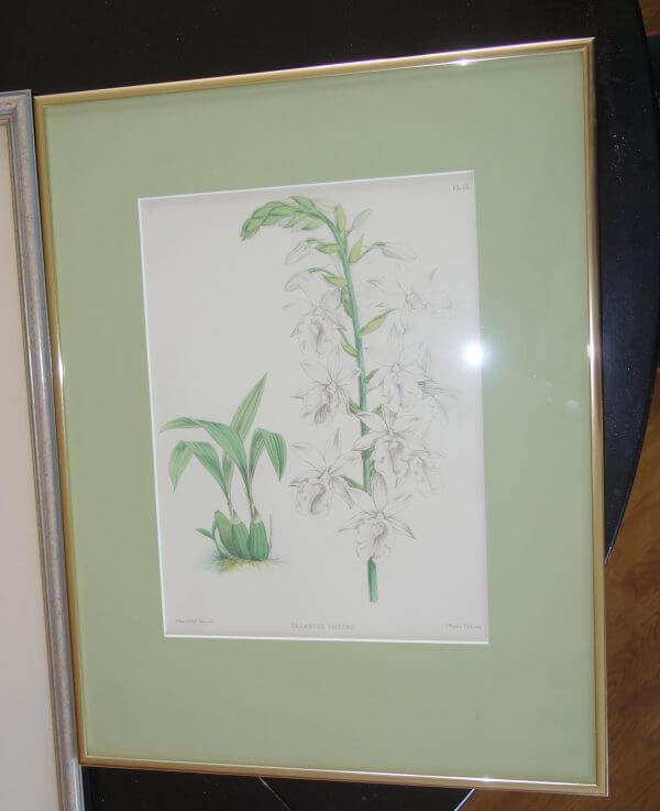 dein-marktplatz-bild-orchidee-calanthe-klein